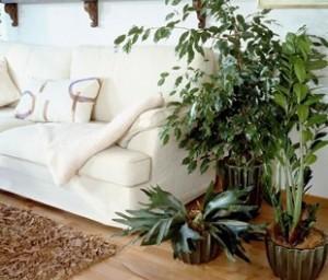 Plantes-vertes-maison